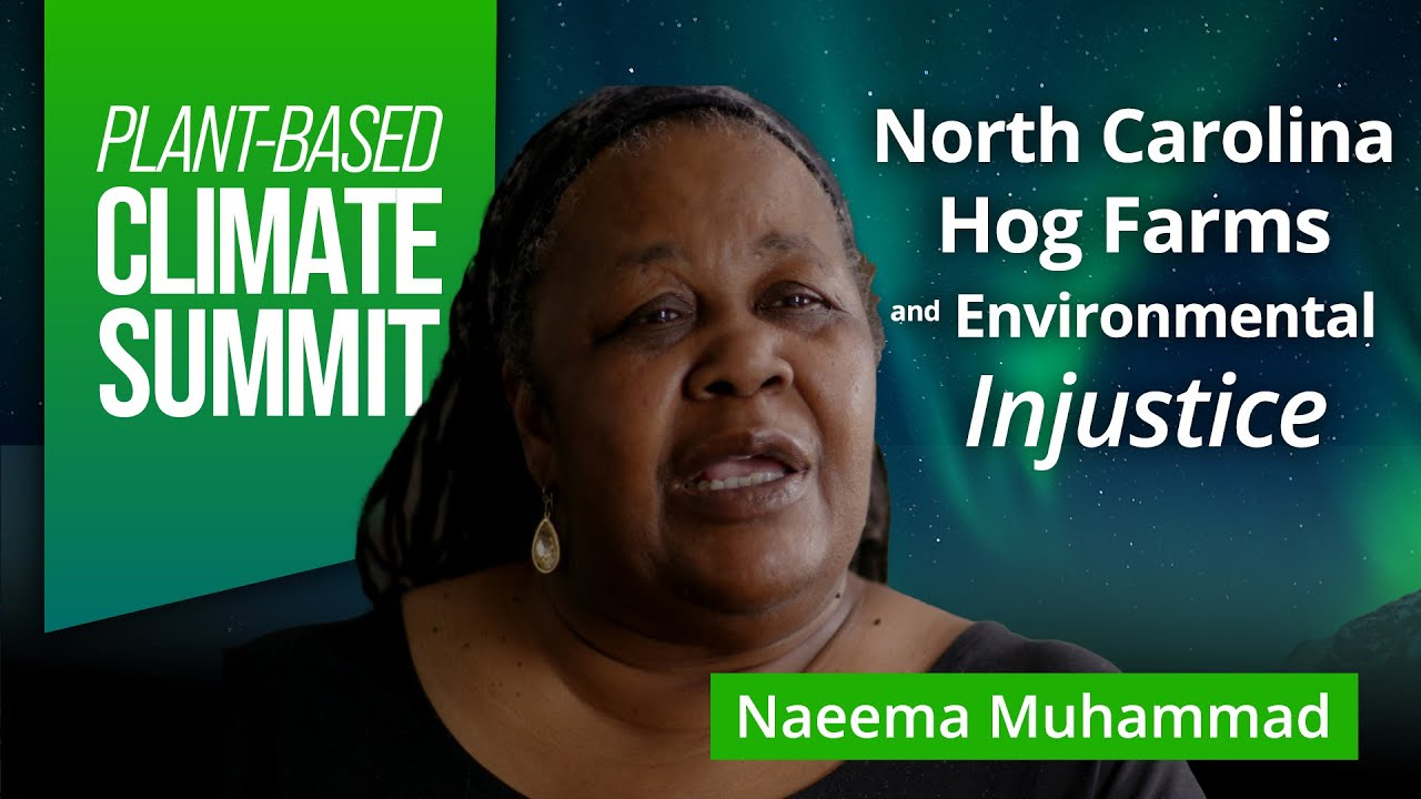 Animal Agriculture and Environmental Injustice | Naeema Muhammad