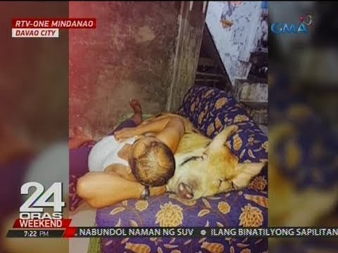 24 Oras: Kakatayin sanang baboy, ginawang pet ng isang pamilya