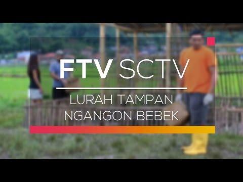 FTV SCTV - Lurah Tampan Ngangon Bebek