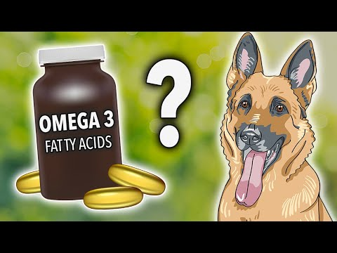 Omega-3 For Dogs