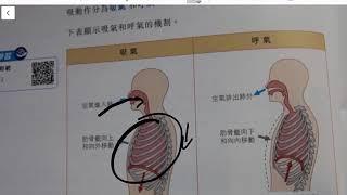 Publication Date: 2019-11-18 | Video Title: 天主教培聖中學 生物科 F 4 單元七 (2)