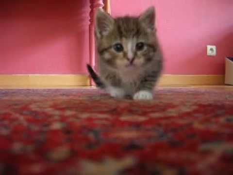 Cat attacking camera!