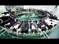 Intelligente technologie schlau Landwirtschaft automatisch Kuh Maschine Fütterung Reinigung milch