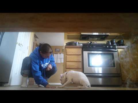 Deaf puppy training