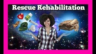 Rehabilitating a Rescue Dragon  Ep.1