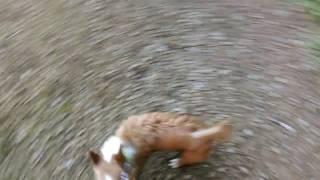 Sunrise dog walk, Galway City, Ireland