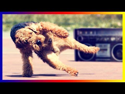 Ultimate Funny Dog Dancing Collection By Lisa Hudberman
