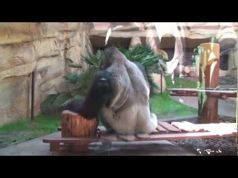 France Trip 2009 (part 12) - La Palmyre Zoo