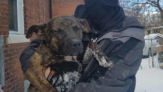 Люди выгнали собаку на мороз , но один парень сделал для неё кое-что