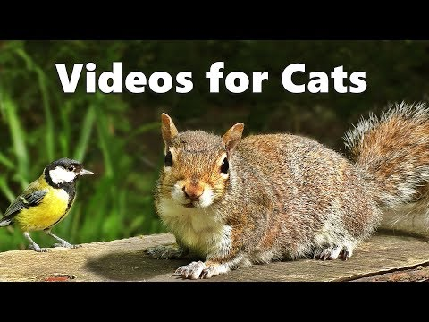 Videos for Cats to Watch – Squirrels and Birds Spectacular