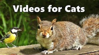 Videos for Cats to Watch  Squirrels and Birds Spectacular