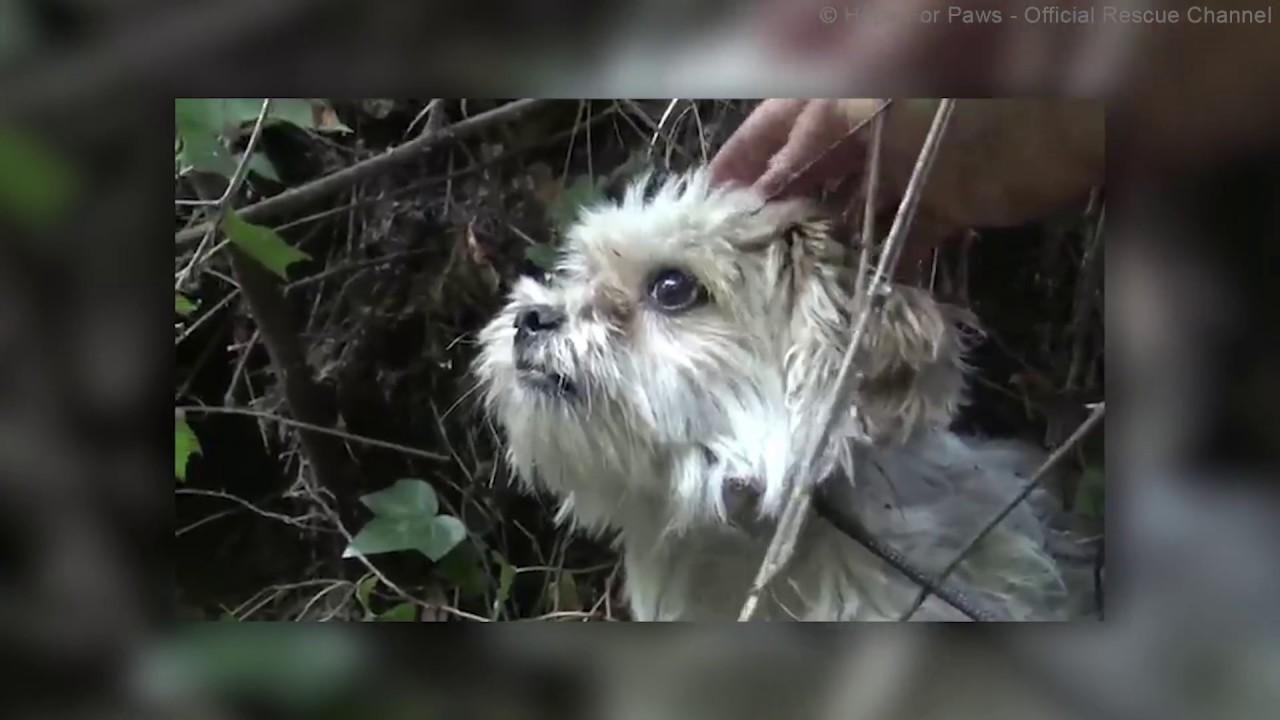 Geschichte Des Hundes