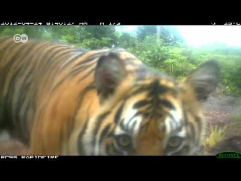 Protecting Sumatra's biodiversity | Global Ideas