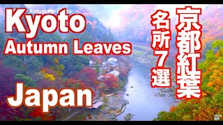 hd autumn colors in kyoto japan 秋の京都の紅葉 嵐山などの名所と清水寺のライトアップ 紅葉便り 日本の紅葉