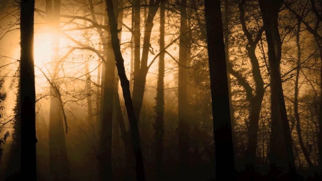 Страшные звуки леса скачать