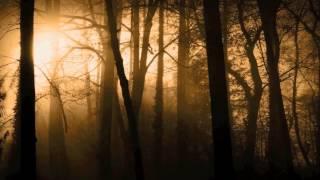 Звук лесной чащи в фильме ужасов, музыка для завершения действия, Sound forest thicket in a horror