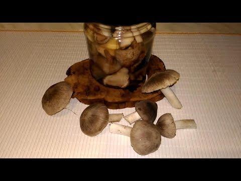Обработка грибочков + рецепт мариновки мышат, маслят и др.