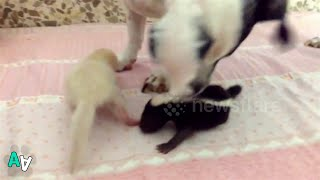 Dog is Stepmum to Pair of Abandoned Baby Skunks