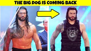 Roman Reigns The Big Dog Is Returning Soon & Roman Reigns Is Turning Face Once Again |
