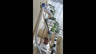 hidroponik sistem, balkonda topraksız tarım denemesi, ırımtüzen