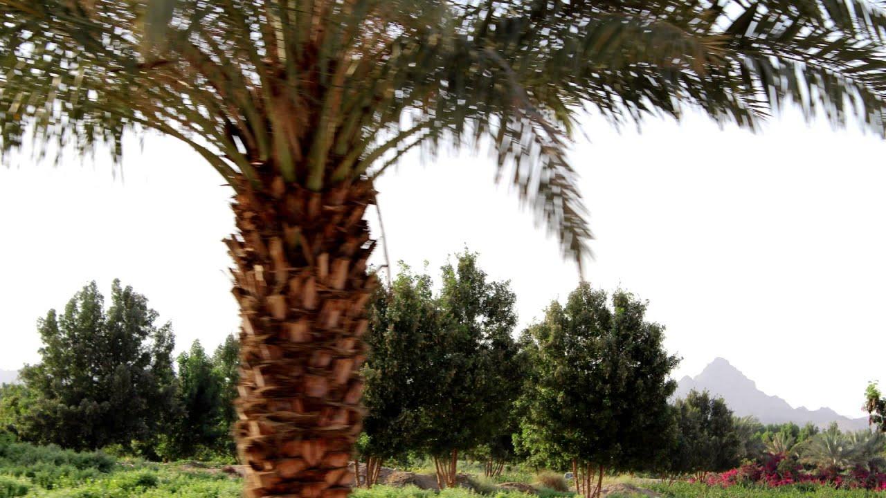 صور HD مشروع جدة الغابه الشرقيه في وادي العسيلاء - YouTube
