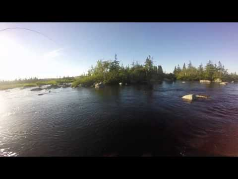 Atlantic Salmon Newfoundland