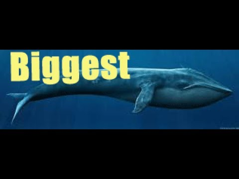 Killer Whale Attack Documentary : Best Documentary Of All Time