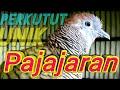 Perkutut Lokal Memanggil Suara Mengayun Cocok Buat Pikat  Mp3 - Mp4 Download