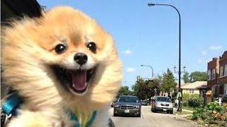Смешные собаки - видео Сборник [NEW HD]