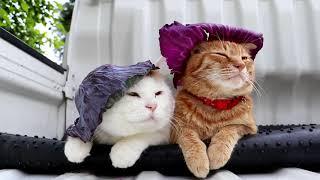 Два кота и фиолетовая капуста - Модные коты в шляпках из капусты