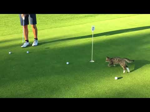 Barbara Ann - Ben The Putting Green Cat Has Got the Moves
