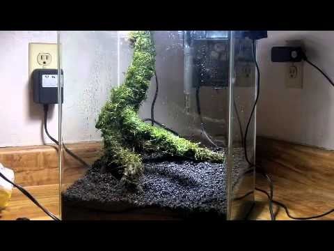 Good Aquascaping A Planted Aquarium Fluval Flora Nano Fish Tank With A Dirt  Substrate