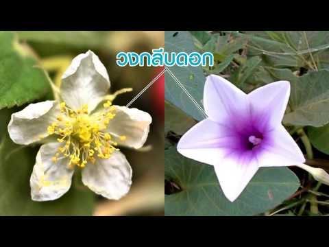 วิชาชีววิทยา - โครงสร้างดอกไม้