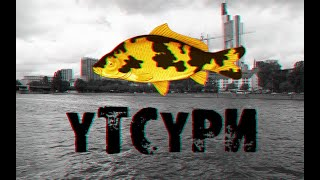 Копия видео Русская рыбалка 3.99 карпы Кои АСАГИ