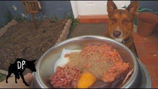 Nala the Australian Kelpie GSD Cross eating Kefir, Raw Beef Heart, ...