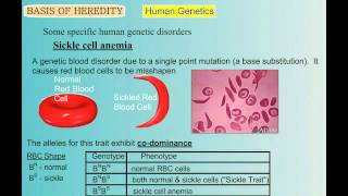 Genetics Part 5: Human Genetic Disorders