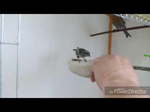 Вольер для птицы своими руками