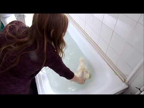 Duck, New Little Friend, By Karl-James Langford