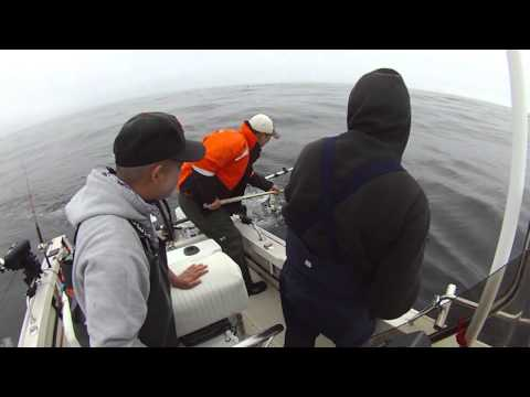 Salmon Fishing Pt. Reyes - Another Day Of Limits