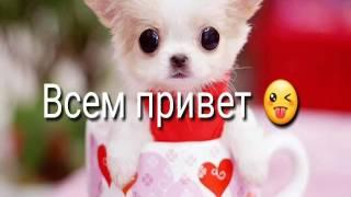 Моя рыжая собака.