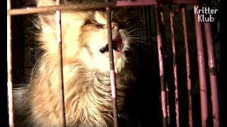 Cats Cry Out For An Escape From The Puppy Mill   Animal In Crisis EP24