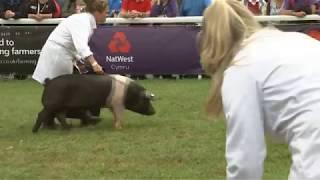 Pencampwriaeth Parau Moch | Pig Pairs Championship