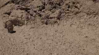 Bubbling Mud Pot in Yellowstone - With Sound - Stock Video