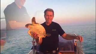 Tartaruga marina salvata Manduria