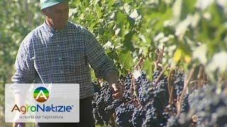Agricoltura più intelligente con il progetto Foodie