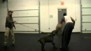 Cincinnati K9 Company Protection Training