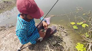 Fish hunting || Fishing || Tilapia fish And Rohu fish catch