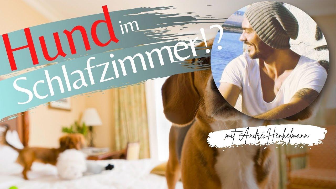 Hund & Schlafzimmer – Probleme & Lösungen
