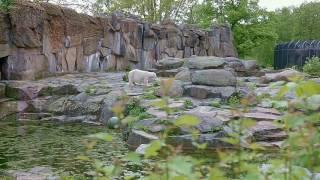 Отпуск в Берлине. День 1: Berliner Zoo/Берлинский зоопарк