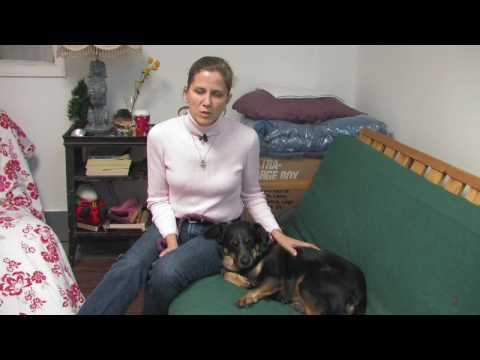 Dog Breeds : How to Select a Blue Heeler